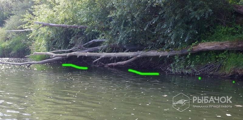 Поиск хищника на незнакомом водоеме
